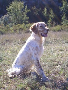 dog-de-sonella