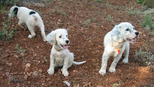 tres-cachorros