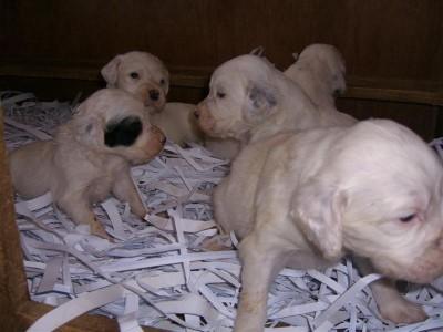 Camada nacida el 20-1-09,  compuesta por 3 machos y 2 hembras