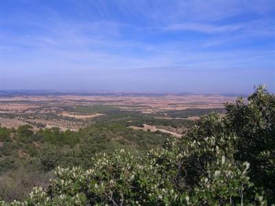 Cañada Juncosa de Albacete
